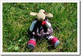 , Owieczka dla Owcy